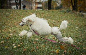 Išskirtinės išvaizdos šunis laikanti moteris ranka numoja į kandžias replikas