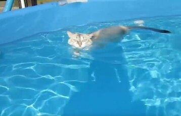 Baseine plaukiojanti katė socialiniuose tinkluose kelia susižavėjimą