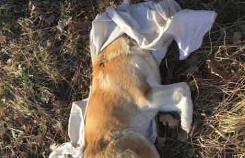 Nukankinto šuns istorija sujudino ledus: prabilo apie pokyčius, kurie palies visus šeimininkus