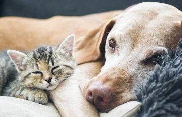 Apklausa: Lietuvoje šunims ir katėms šeimininkai stokoja laiko