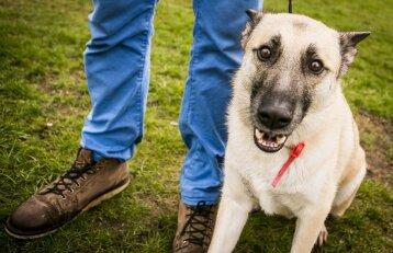 Šunų dresūra: kaip tinkamo elgesio sulaukti nenaudojant skanukų?