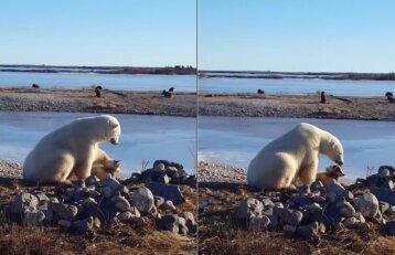 Neįtikėtina akimirka: baltasis lokys glosto šunį