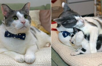 Skaudi patirtis katinui tapo lemtinga: pradėjo rūpintis beglobiais kačiukais