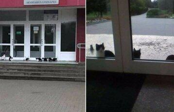 Direktorius uždraudė maitinti kates prie gimnazijos: reginys sukėlė pasipiktinimą