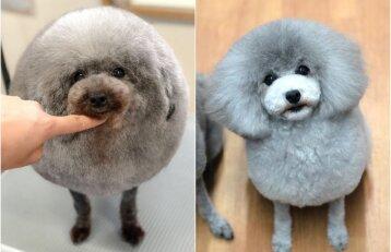 Neįprasti šunų kirpėjos darbai: augintinio tikriausiai neatpažintumėte