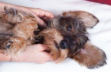 Blogas kvapas iš šuns burnos. Kaip su tuo kovoti?