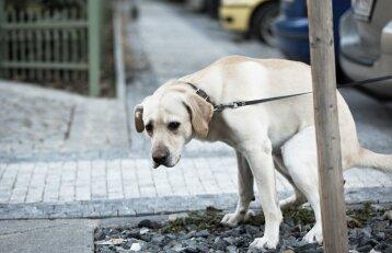 Ištirpęs sniegas atidengė bjaurią problemą: šunų šeimininkams turėtų būti gėda
