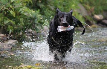 """Akcijoje """"Darom"""" kviečiami apsišvarinti ir šunų mylėtojai"""