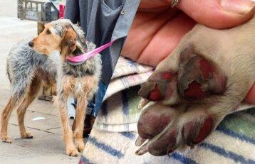 Būkite atsargūs: štai kas gali nutikti šuns pėdoms pernelyg karštomis dienomis