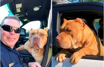 """Pareigūnas gavo iškvietimą dėl agresyvaus šuns: tokio """"puolimo"""" nesitikėjo"""