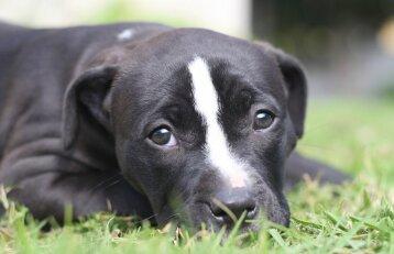 Šunį užmušusiam panevėžiečiui – areštas