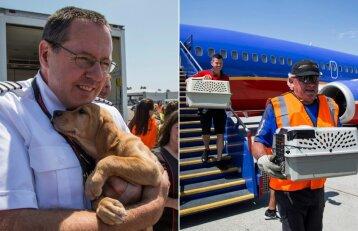 Oro linijų bendrovė išgelbėjo beglobius gyvūnus: nuskraidino iš nusiaubto regiono