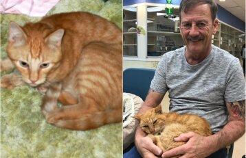 Dingusio katino nenustojo ieškoti 14 metų: atkaklus vyras pasiekė savo