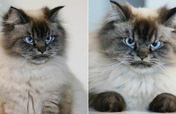 Katinas, kuriam įtikti neįmanoma: pažiūrėkite, koks jis piktas