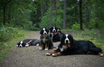 """Šuns diena su """"pačiausiais"""" šunimis"""