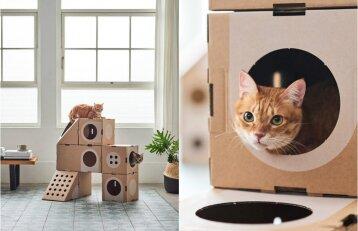 Pastatė tikrą kačių rojų: pasižiūrėkite, kiek nedaug gyvūnams reikia iki laimės