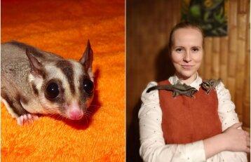 Ieva susidraugavo su voverinėmis skraiduolėmis: naktimis jos iškrečia daug išdaigų