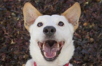 Seimo nariai neapsisprendžia, ar leisti šunims loti: įstatymą žada taisyti jau šeštą kartą