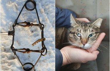Kova su katėmis pasiekė naują lygį: vilniečiai aptiko spąstuose prispaustą gyvūną