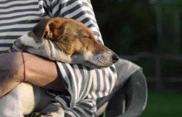 BŪTINA ŽINOTI: kaip gelbėti šunį nutikus nelaimei