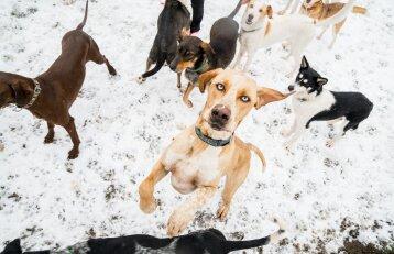 Trisdešimt šunų auginanti šeima: kiekvienas šuo – šeimininko atspindys