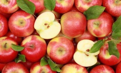 Aukštaitijos ūkininkai papasakojo, kuo išskirtiniai yra lietuviški obuoliai