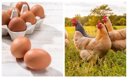 Pirkėjus ragina pirkti tvaresnius kiaušinius
