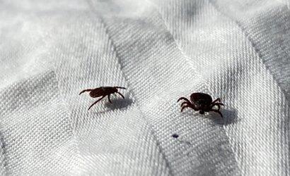 """Pavojingi kraujasiurbiai peržiemojo kaip ant """"pečiaus"""": ekspertė pastebi labai neraminančias tendencijas"""