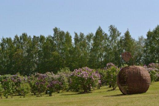 Vilniaus universiteto Botanikos sodo Alyvų kalnas
