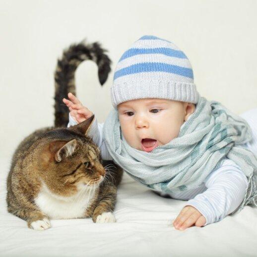 Žmonės alergiški kačių išskiriamam baltymui, o ne jų kailiui