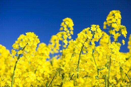 Ūkininkai tokio pavasario nematė 25 metus