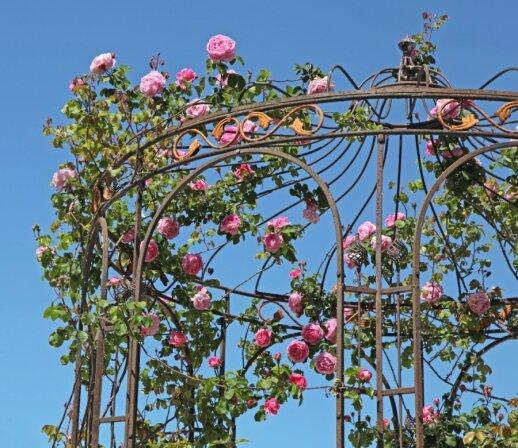 Pavėsinės, pergolės, treliažai ir arkos: ką statyti sode?