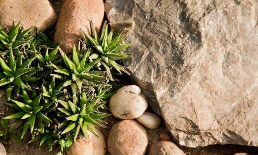 Kaip teisingai panaudoti akmenis kuriant alpinariumą