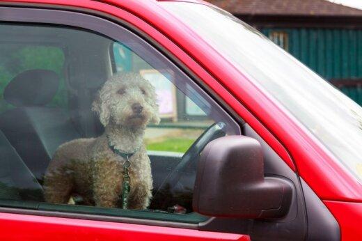 Net ir maži šuneliai, kinologės teigimu, avarijos atveju gali stipriai susižaloti ir sužaloti kitus