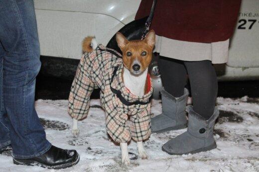 Aprengtas šuo
