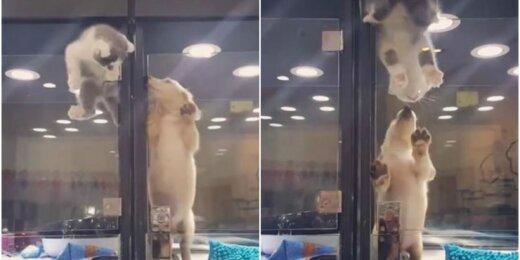 Kačiukas pateko pas šuniuką