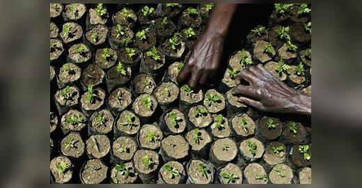 EK pasodins 5000 medelių Tanzanijoje
