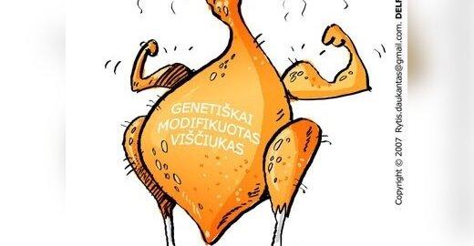 Genetiškai modifikuotas viščiukas