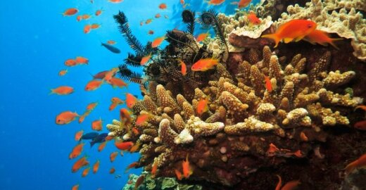 Įkuriant Koralų jūros rezervatą siekiama išsaugoti gausią Didžiojo koralų rifo gyvūniją