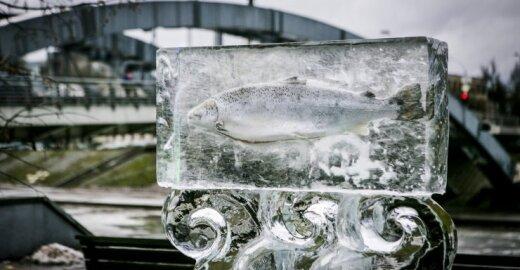 Skulptūra su įšaldyta lašiša