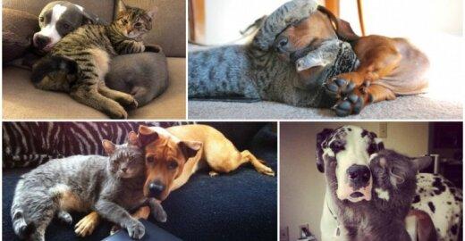 Šunų ir kačių draugystė