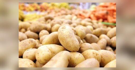 Europos Komisija leido auginti genetiškai modifikuotas bulves