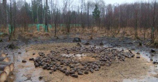 Aplinkosaugininkai miške užfiksavo betvarkę