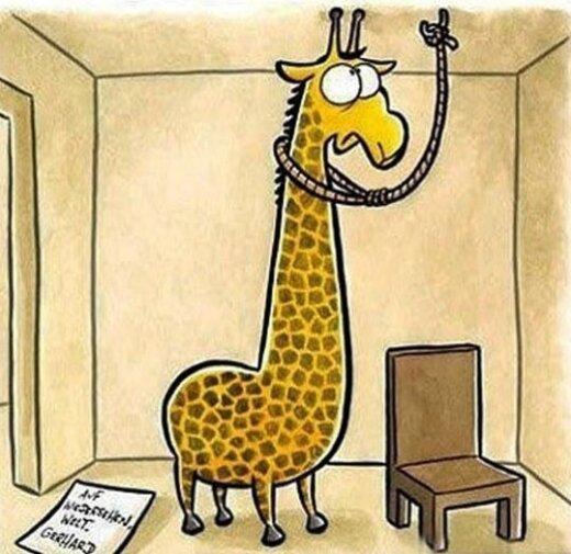 Žirafų gyvenimas yra labai sunkus. Štai kodėl