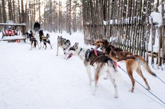 Akimirka iš ankstesnių kelionių į Laplandiją