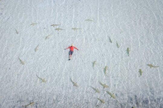 Maudynės su rykliais