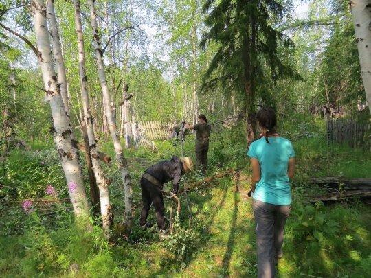Merginos, tempiančios medžius