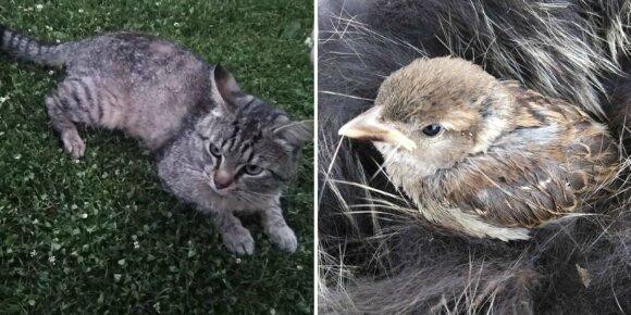 Katinas namo parsinešė paukštelį