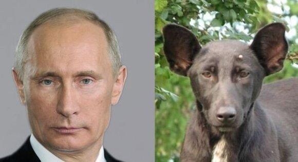"""""""Psy szczekają, karawana idzie..."""", czyli integracja Ukrainy z UE"""