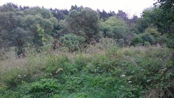 Kavarsko žydų žudynių vieta